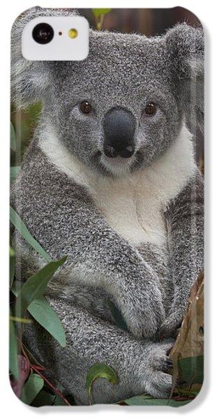 Koala Phascolarctos Cinereus IPhone 5c Case