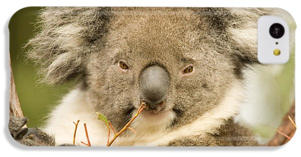 Koala Snack IPhone 5c Case by Mike  Dawson