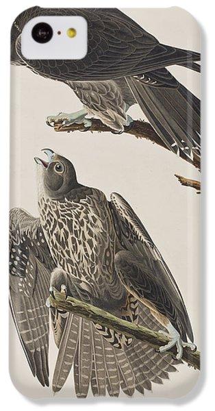 Labrador Falcon IPhone 5c Case