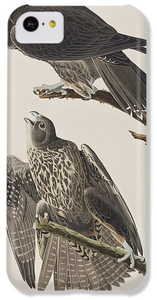 Labrador Falcon IPhone 5c Case by John James Audubon