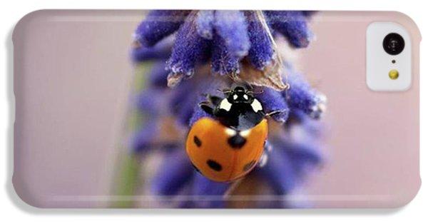 Ladybird On Norfolk Lavender  #norfolk IPhone 5c Case