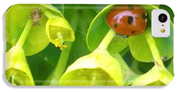 #ladybug Found Some Shelter From The IPhone 5c Case by Shari Warren