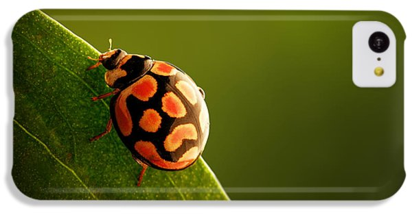 Ladybug  On Green Leaf IPhone 5c Case by Johan Swanepoel