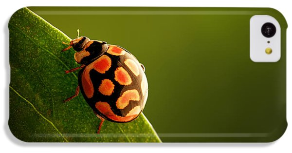 Beetle iPhone 5c Case - Ladybug  On Green Leaf by Johan Swanepoel