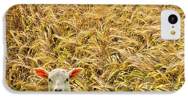 Lamb With Barley IPhone 5c Case by Meirion Matthias