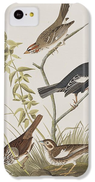 Lark Finch Prairie Finch Brown Song Sparrow IPhone 5c Case by John James Audubon
