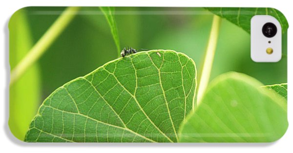 Ant iPhone 5c Case - Leaf And Ant by Kathleen Wong