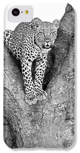 Leopard In A Tree IPhone 5c Case by Richard Garvey-Williams