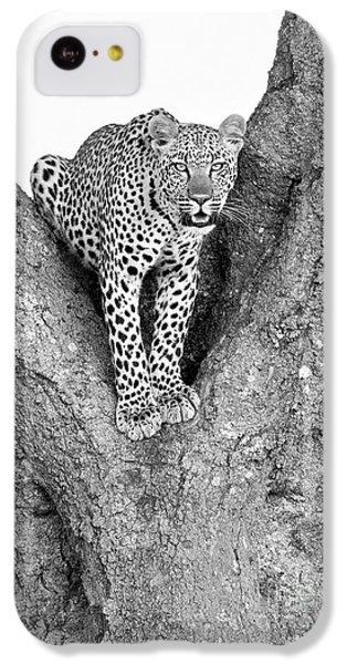 Leopard In A Tree IPhone 5c Case by Richard Garvey-Williams