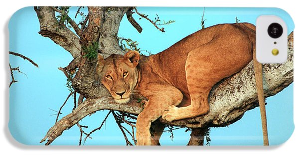 Lioness In Africa IPhone 5c Case
