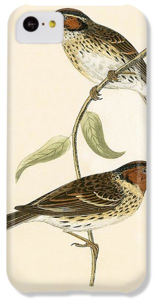 Little Bunting IPhone 5c Case by English School