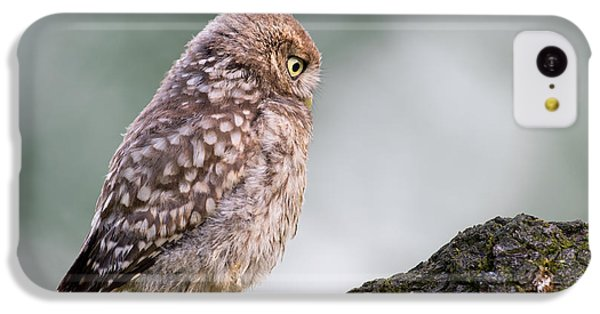 Little Owl Chick Practising Hunting Skills IPhone 5c Case