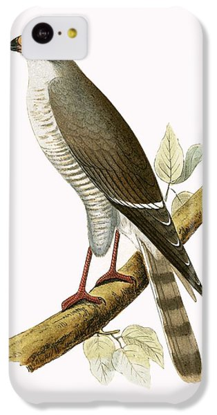 Little Red Billed Hawk IPhone 5c Case by English School