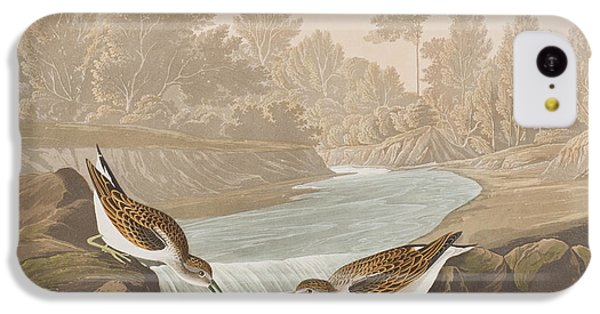 Little Sandpiper IPhone 5c Case by John James Audubon