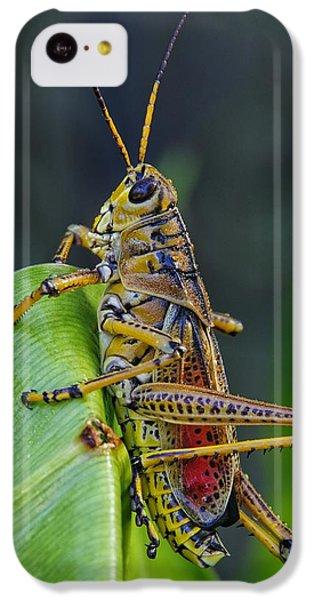 Lubber Grasshopper IPhone 5c Case
