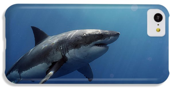 Lucy Posing At Isla Guadalupe IPhone 5c Case by Shane Linke