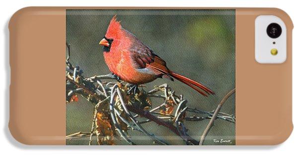 Male Cardinal IPhone 5c Case by Ken Everett