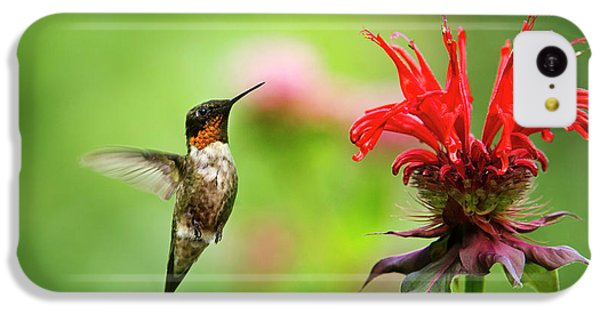 Male Ruby-throated Hummingbird Hovering Near Flowers IPhone 5c Case