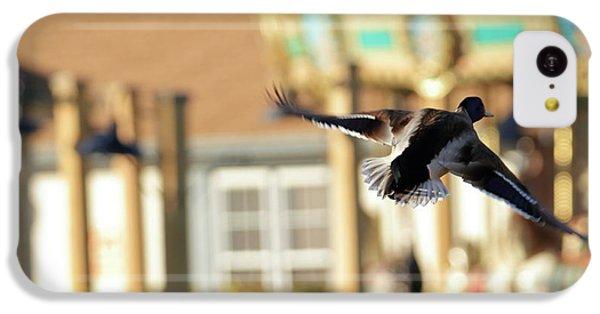 Cedar Waxing iPhone 5c Case - Mallard Duck And Carousel by Geraldine Scull