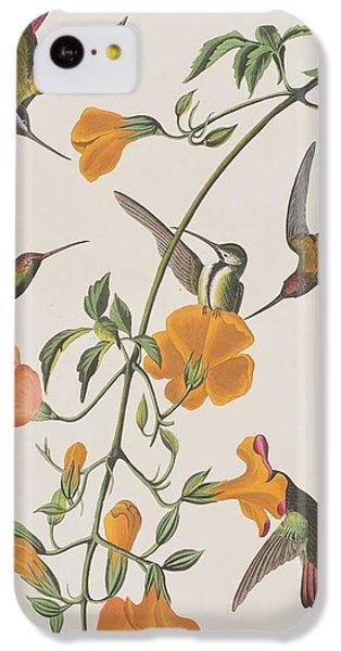 Humming Bird iPhone 5c Case - Mango Humming Bird by John James Audubon