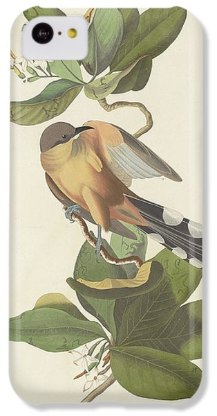 Cuckoo iPhone 5c Case - Mangrove Cuckoo by Dreyer Wildlife Print Collections