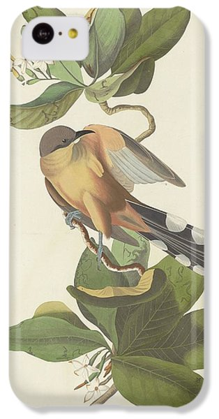 Mangrove Cuckoo IPhone 5c Case by Anton Oreshkin