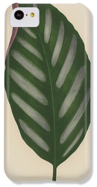 Maranta Porteana IPhone 5c Case by English School