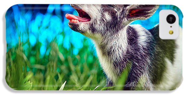 Baby Goat Kid Singing IPhone 5c Case by TC Morgan