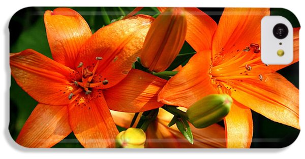 Floral iPhone 5c Case - Marmalade Lilies by David Dunham