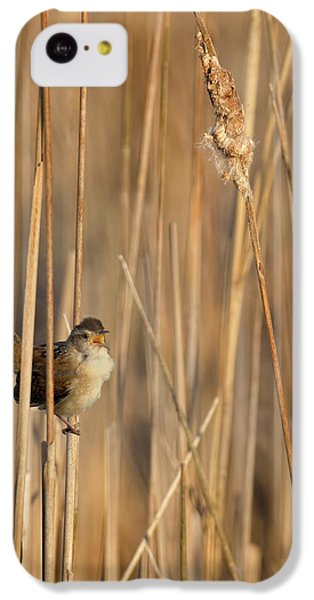 Marsh Wren IPhone 5c Case