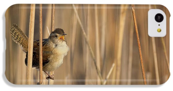 Marsh Wren Square IPhone 5c Case