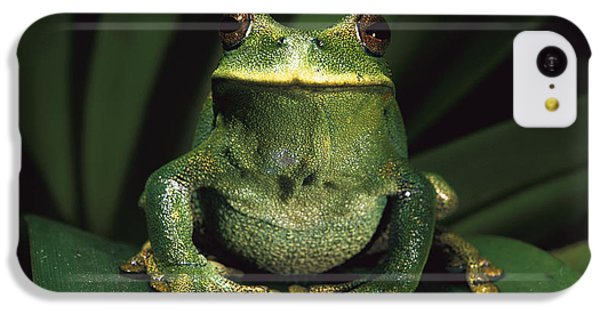 Marsupial Frog Gastrotheca Orophylax IPhone 5c Case by Pete Oxford