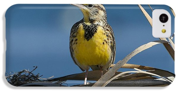 Meadowlark Beauty IPhone 5c Case