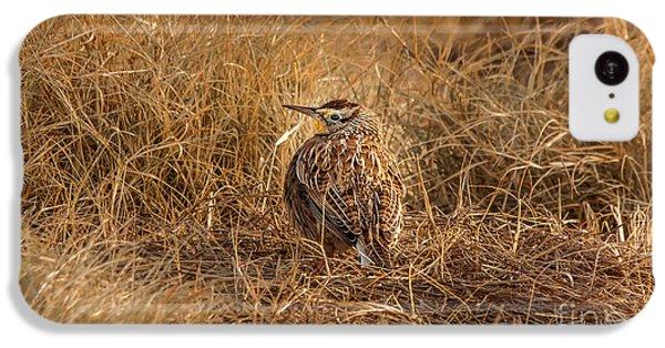 Meadowlark Hiding In Grass IPhone 5c Case by Robert Frederick