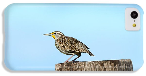 Meadowlark Roost IPhone 5c Case by Mike Dawson