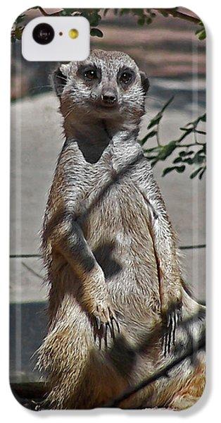 Meerkat 2 IPhone 5c Case by Ernie Echols