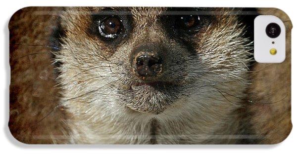 Meerkat 4 IPhone 5c Case by Ernie Echols