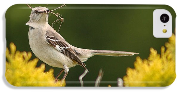 Mockingbird iPhone 5c Case - Mockingbird Perched With Nesting Material by Max Allen