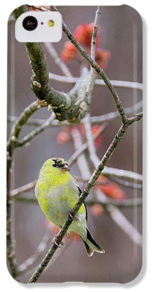 IPhone 5c Case featuring the photograph Molting Gold Finch by Bill Wakeley