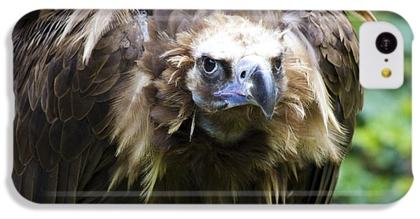 Monk Vulture 3 IPhone 5c Case by Heiko Koehrer-Wagner