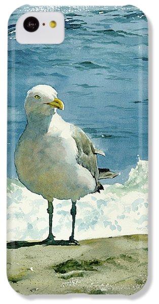 Beach iPhone 5c Case - Montauk Gull by Tom Hedderich