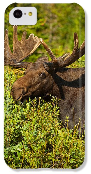 Moose IPhone 5c Case by Sebastian Musial
