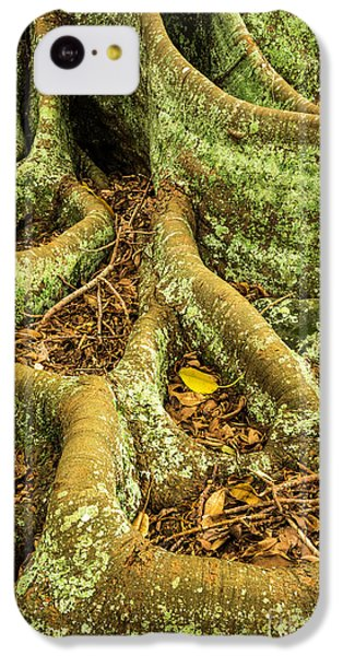 IPhone 5c Case featuring the photograph Moreton Bay Fig by Werner Padarin