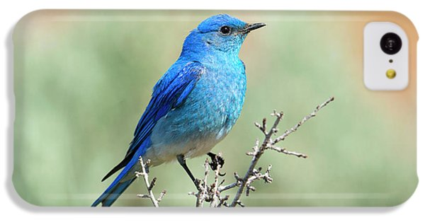 Mountain Bluebird Beauty IPhone 5c Case by Mike Dawson