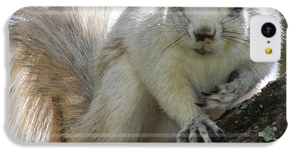 Mr. Inquisitive II IPhone 5c Case by Betsy Knapp