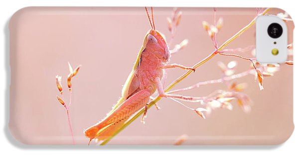 Grasshopper iPhone 5c Case - Mr Pink - Pink Grassshopper by Roeselien Raimond