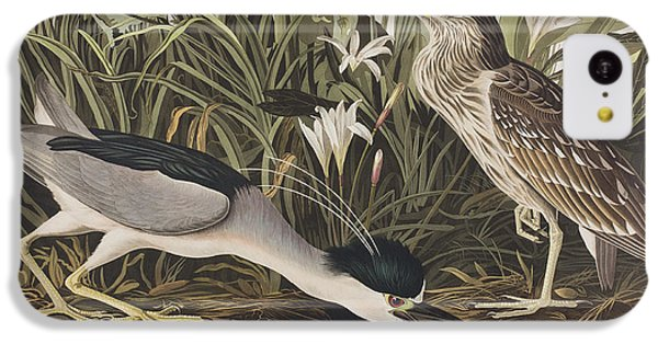 Night Heron Or Qua Bird IPhone 5c Case by John James Audubon