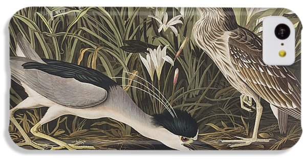 Night Heron Or Qua Bird IPhone 5c Case by John James Audubon