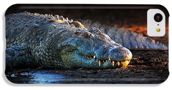 Nile Crocodile On Riverbank-1 IPhone 5c Case by Johan Swanepoel
