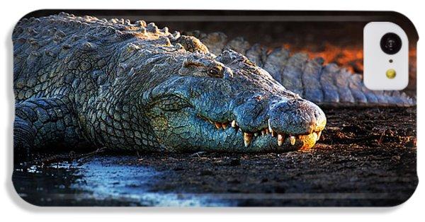 Crocodile iPhone 5c Case - Nile Crocodile On Riverbank-1 by Johan Swanepoel